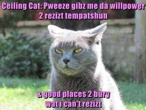 Ceiling Cat: Pweeze gibz me da willpower                     2 rezizt tempatshun   & good places 2 bury                                                                                         wat i can't rezizt