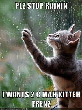 PLZ STOP RAININ  I WANTS 2 C MAH KITTEH FRENZ