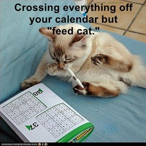"""Crossing everything off your calendar but             """"feed cat."""""""