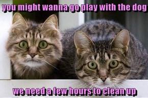 Clean what? Ooooooooh nothin'