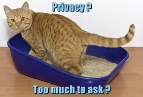 Privacy ?  Too much to ask ?