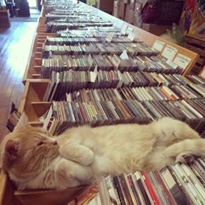Got Any Cat Stevens?