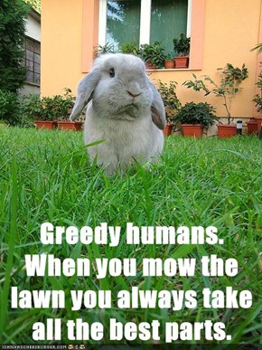 Greedy humans. When you mow the lawn you always take all the best parts.
