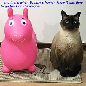 ...and that's when Tommy's human knew it was time to go back on the wagon