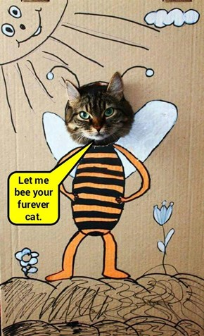 bzzzy cat for ToolBee! (recaption: http://tinyurl.com/zsvp8r2