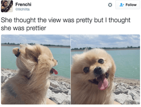 Dogs Finally Get the Compliments They Deserve in These Pretty Tweets