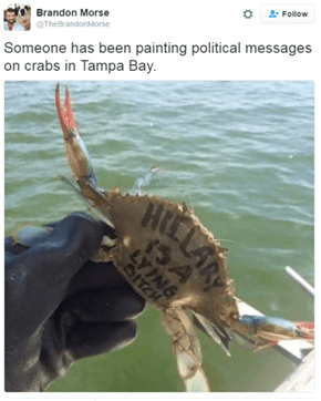 Leave the Crabs Out of This