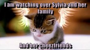 I am watching over Sylvia and her family  And her cheezfriends