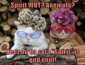 "Spirit WUT? Anemuls?   Heer on da sofa ""Spirit"" is gud enuf!"