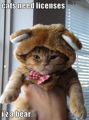 cats need licenses  i'z a bear