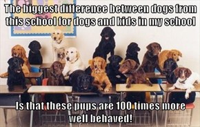 The biggest difference between dogs from this school for dogs and kids in my school  Is that these pups are 100 times more                                                                            well behaved!