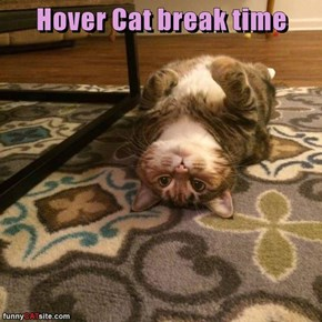Hover Cat break time