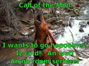 Call of the Mild  I wants to go hoooome !                     Iz cold!   An wet!                An no room serbice!