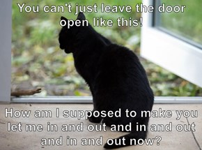 You can't just leave the door open like this!  How am I supposed to make you let me in and out and in and out and in and out now?