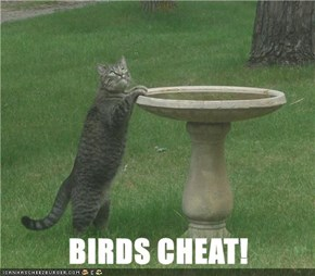 BIRDS CHEAT!