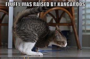 FLUFFY WAS RAISED BY KANGAROOS