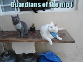 Guardians of the nip !