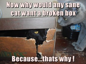Now why would any sane cat want a broken box  Because...thats why !