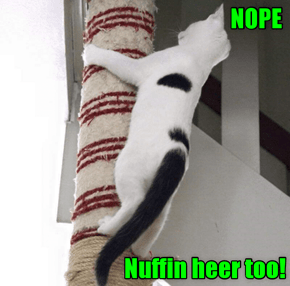 Kitteh Helps In Search Of The Missing Balloons