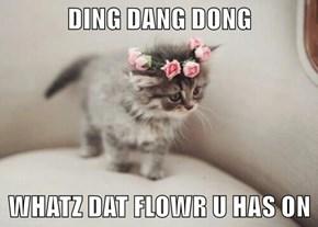 DING DANG DONG  WHATZ DAT FLOWR U HAS ON