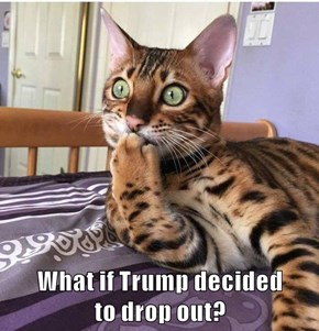 What if Trump decided                   to drop out?