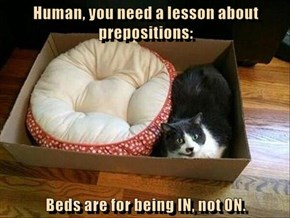 Human, you need a lesson about prepositions:  Beds are for being IN, not ON.