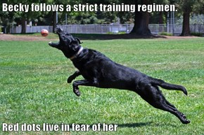 Becky follows a strict training regimen.  Red dots live in fear of her