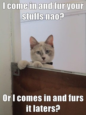 I come in and fur your stuffs nao?  Or I comes in and furs it laters?
