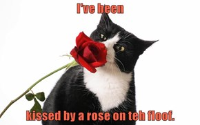 I've been  kissed by a rose on teh floof.