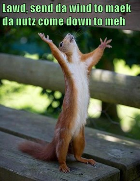 Lawd, send da wind to maek da nutz come down to meh