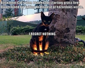 Basement Cat's bum blamed for starting grass fire! Owner fined for failing to dispose of hazardous waste.  I REGRET NOTHING.