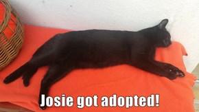 Josie got adopted!