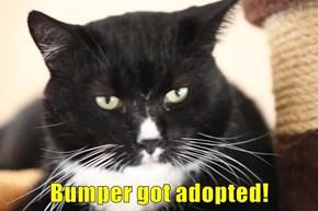 Bumper got adopted!