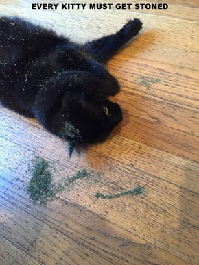 EVERY KITTY MUST GET STONED