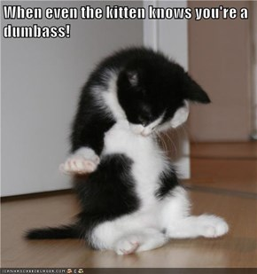 When even the kitten knows you're a dumbass!
