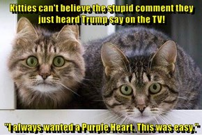 "Kitties can't believe the stupid comment they just heard Trump say on the TV!  ""I always wanted a Purple Heart. This was easy."""