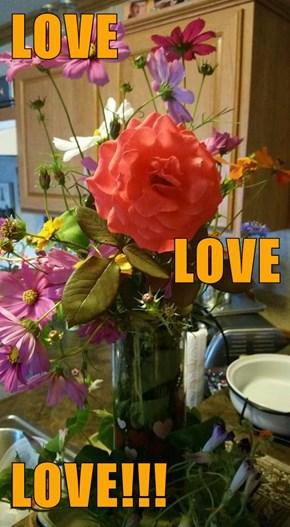 LOVE  LOVE  LOVE!!!