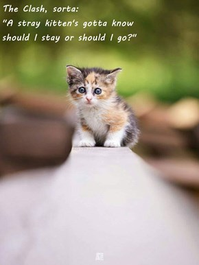 """The Clash, sorta:                                                                                  """"A stray kitten's gotta know                                                                        should I stay or should I go?"""""""