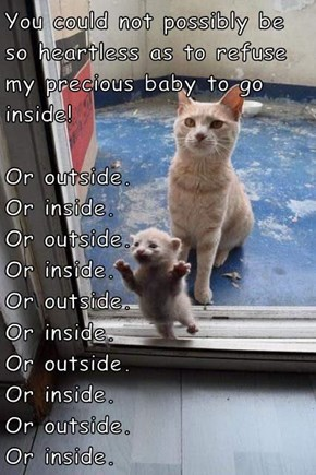 You could not possibly be so heartless as to refuse my precious baby to go inside! Or outside.                                Or inside.                               Or outside.                                Or inside.                              Or ou