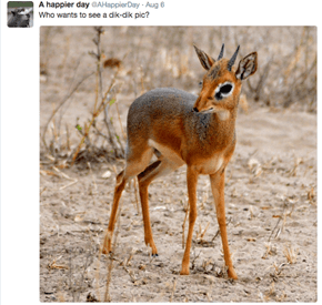 Twitter Has No Chill When It Comes to the Tiny Dik-Dik