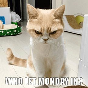 WHO LET MONDAY IN?