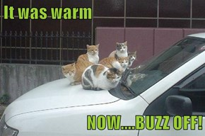 It was warm  NOW....BUZZ OFF!