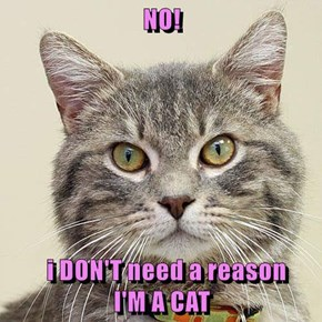 NO!    i DON'T need a reason                                            I'M A CAT