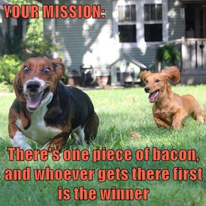 YOUR MISSION:  There's one piece of bacon, and whoever gets there first is the winner