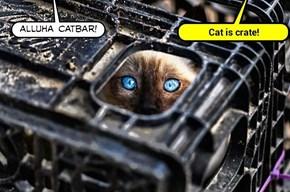 Alluha Catbar! (recaption: http://builder.cheezburger.com/builder?tiid=10131241