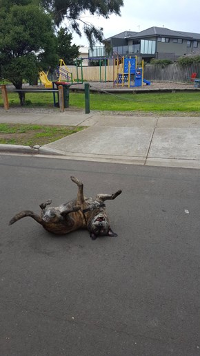 Borked Dog Got Too Excited About the Park