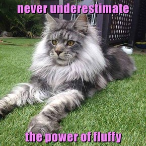 never underestimate   the power of fluffy