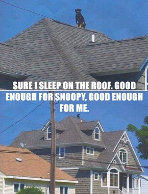 SURE I SLEEP ON THE ROOF. GOOD ENOUGH FOR SNOOPY, GOOD ENOUGH FOR ME.