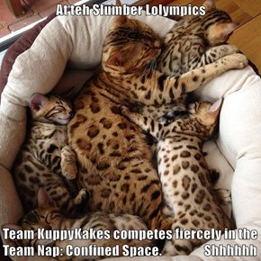 At teh Slumber Lolympics  Team KuppyKakes competes fiercely in the Team Nap: Confined Space.                 Shhhhhh