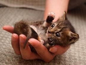 Handful of Adorable